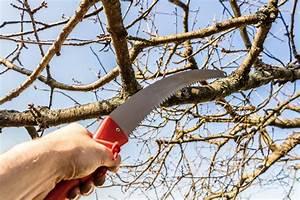 Bäume Verschneiden Obstbäume : schnittarbeiten an geh lzen im winter meister meister blog ~ Lizthompson.info Haus und Dekorationen