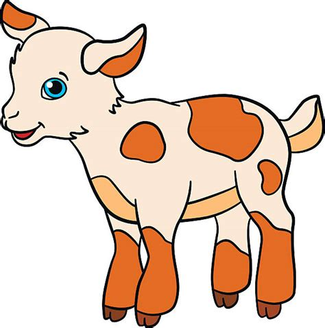 baby calf clipart    clipartmag