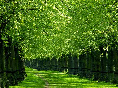 3d Wallpapers Trees by Green Nature Wallpaper Wallpapersafari