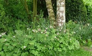Pflanzen Für Trockene Schattige Standorte : 11 besten unser haus bilder auf pinterest garten ~ Michelbontemps.com Haus und Dekorationen