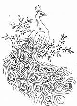Peacock Coloring Downloadable Printable Coloringpagesfortoddlers Viawww sketch template