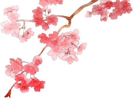 Cherry Blossom Wallpaper Anime Cherry Blossom Png 2 By Dothenyancat On Deviantart
