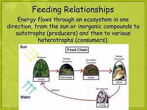 Food Web - Wikipedia