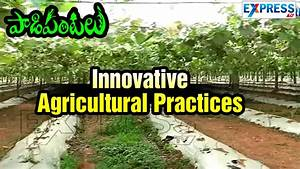 Innovative Agricultural Practices In Vegetables ...