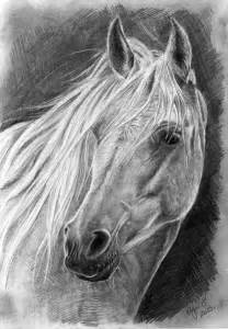 Black and White Pencil Drawings Horse