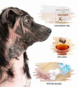 10 Home Remedies For Hot Spots In Dogs