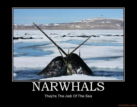 Narwhal Meme - narwhals for laughs and giggles pinterest demotivational posters and memes