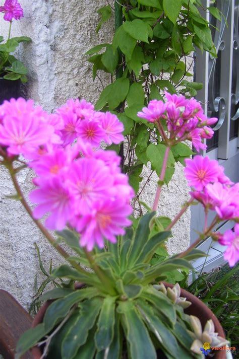photo plante grasse fleurie