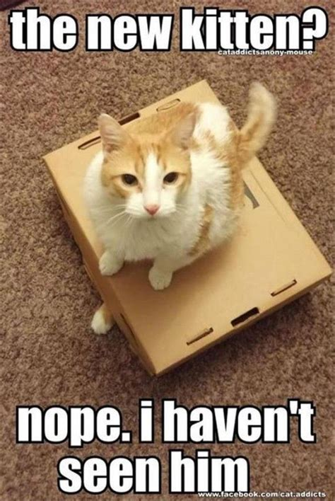 New Cat Memes - 20 cute animal memes that will make you say quot aww