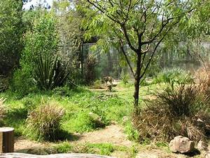 African Wild Dog Habitat » Los Angeles Zoo & Botanical ...