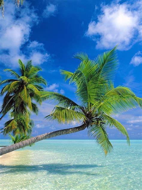 Tropical Paradise At Maldives iPad Wallpaper, Background ...