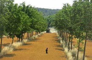 Agroforestry Design Design And Development Of Agroforestry Systems Suitable