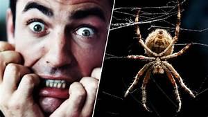 Faire Fuir Les Araignées : comment vaincre sa peur des araign es en deux minutes des scientifiques ont trouv la solution ~ Melissatoandfro.com Idées de Décoration
