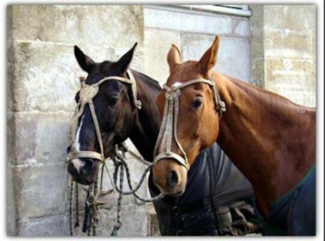 polo horse pony horses