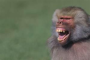 Undeniably Interesting Facts About Monkeys