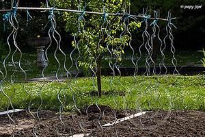 Planter Des Graines De Tomates : planter les tomates autrement trucapapy ~ Dailycaller-alerts.com Idées de Décoration