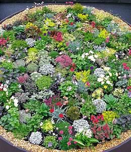 Steinbeet Pflanzen Winterhart : steingarten stauden mix 10 pflanzen g nstig online kaufen ~ Watch28wear.com Haus und Dekorationen