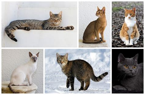 How To Understand Your Cat's Body Language And
