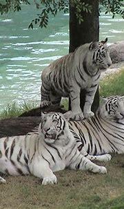 The Biggest Animals Kingdom: Oktober 2012