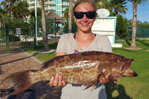 grouper types florida scamp lady