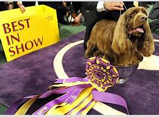 Stump, a 10yearold Sussex spaniel, named Best in Show at