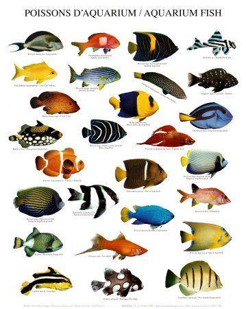 types  tropical fish    pet tropical