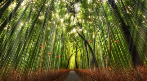 Animated Forest Wallpaper - beautiful bamboo forest animated wallpaper