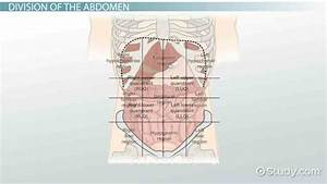 Blank Abdominal Quadrants Diagram