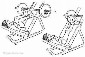 Leg Press    Machine Squat Press