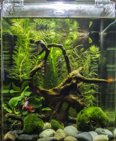 quel aquarium pour un combattant poisson combattant dans 5l sans chauffage ni filtre