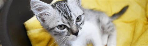 frequently asked question abu dhabi animal shelter