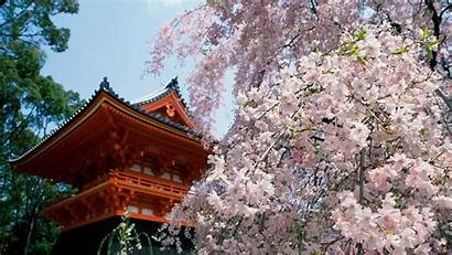 Spring Japanese Garden Wallpapers 1080p Chinese Outdoors