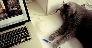 Comment Savoir Si Mon Ordinateur Est Surveillé : comment savoir si mon chat est pileptique ~ Medecine-chirurgie-esthetiques.com Avis de Voitures