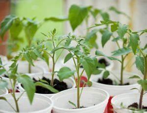 Mini Serre D Intérieur : plantes fleurs et potager conseils et astuces ~ Dailycaller-alerts.com Idées de Décoration