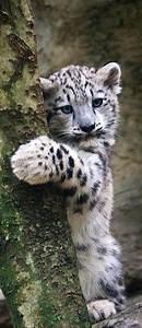 clouded leopard baby | Cute stuff | Pinterest