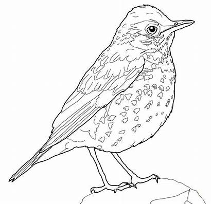 Coloring Bird Thrush Wood Robin Pages Drawing