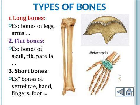 Human Locomotion System Outline Objectives Key Terms Skeletal