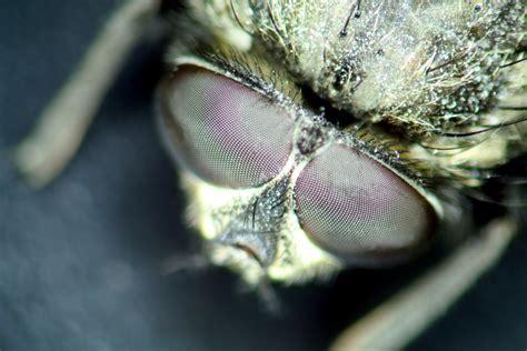 rid  black flying bugs  bathrooms ehow