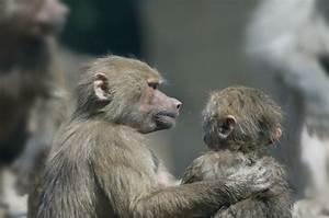 6 Amazing Ways Animals Show Compassion | Mother Jones