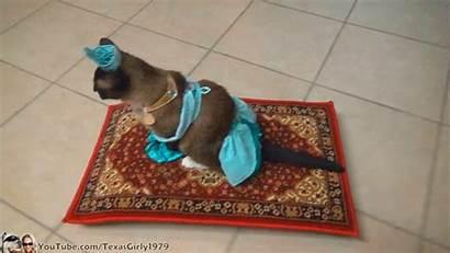Cat Princess Carpet Magic Halloween Disney Jasmine