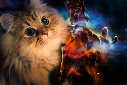 Cat Galaxy Wallpapers 1365 2048 Adorable