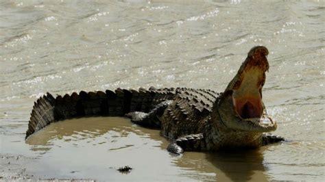 monstrueux crocodile marin capture en australie www
