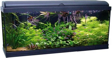 am 233 nagement exemple d 233 cor aquarium eau douce