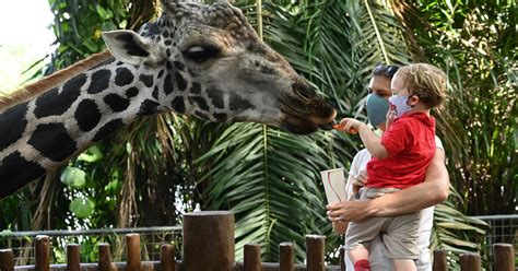 Are Zoos Safe To Visit? Here's What The Experts Say