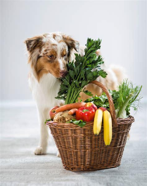 im trend vegane ernaehrung fuer hunde themenwelt wissen