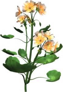 Plant High Resolution Clip Art