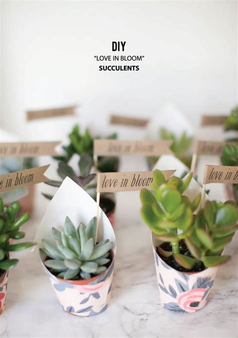 25 Best Ideas About Succulent Favors On Pinterest