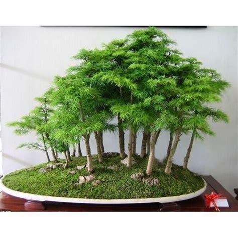 Bonsai Baum Preis by Best 25 Juniper Bonsai Ideas On Bonsai Trees