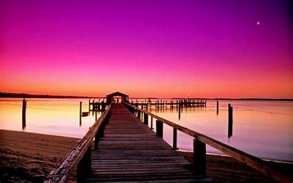 Cat Sunset Sky Sand Nature Itl Pier