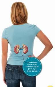 Owner U2019s Manual  Your Kidneys  U2014 A Primer
